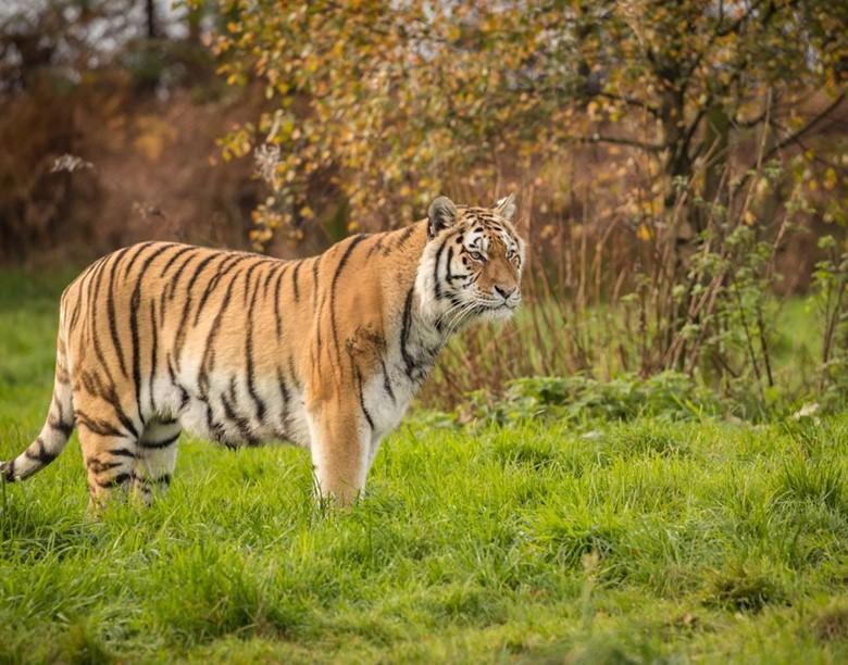 Adopt a Safari Animal Today   Adoption Packs   Knowsley Safari