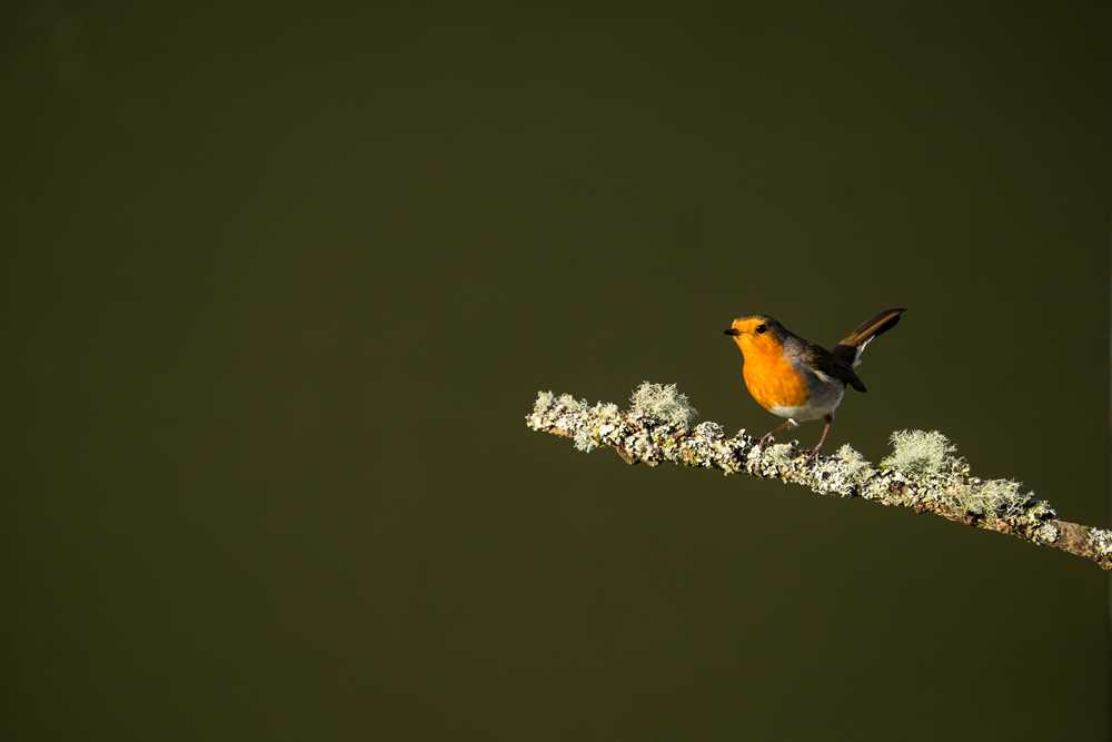Classic Biritish Birds Workshop ds1-Robin-Fuji-XT1-Jan15-7757.jpg