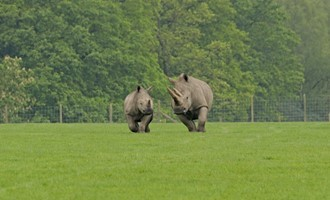 Sad news from Knowsley Safari