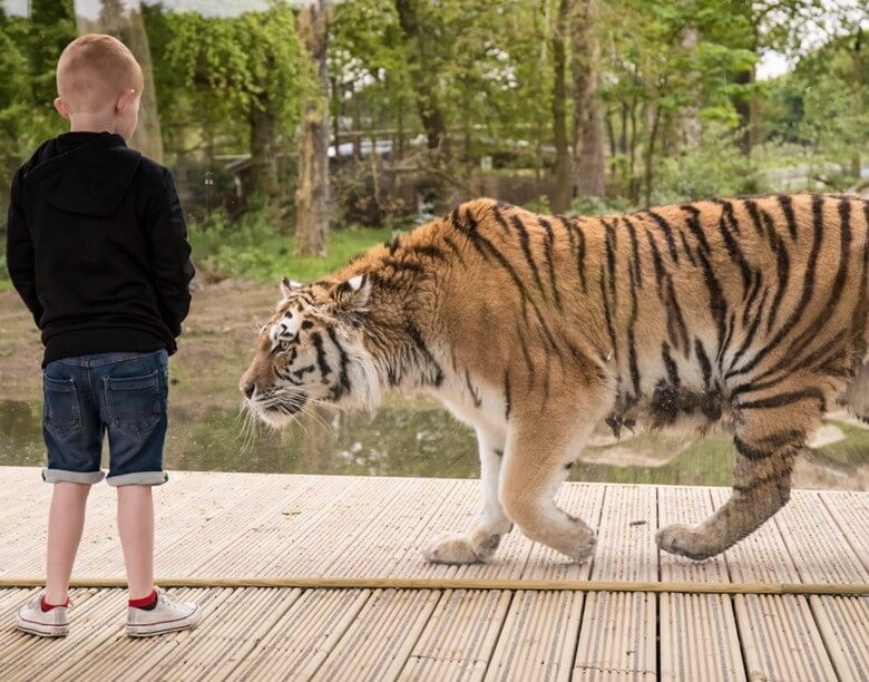 Knowsley Safari - A Truly Wild Encounter in the North West