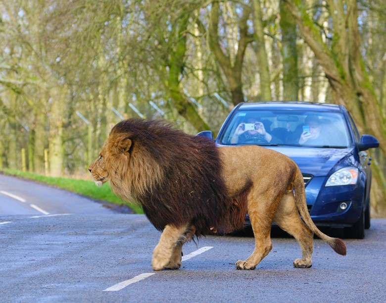 The Uk S Longest Drive Through Safari Park Knowsley Safari